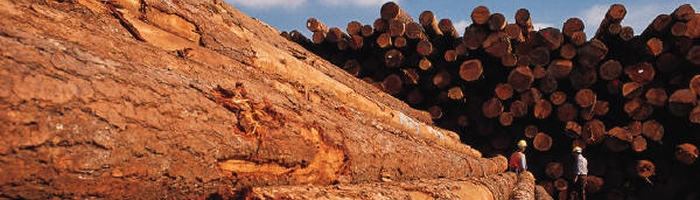 cpg timber Other Business   Timber Concession